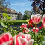 Blick auf das Schorndorfer Burgschloss mit Tulpen im Vordergrund