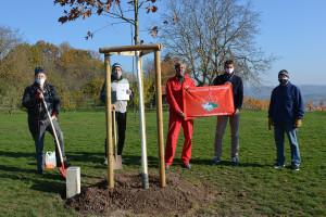 Die Naturfreunde spenden der Stadt Schorndorf eine Eiche auf dem Grafenberg.