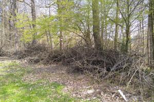 Am Tannenwaldsträßchen wurde Grüngut illegal abgelagert