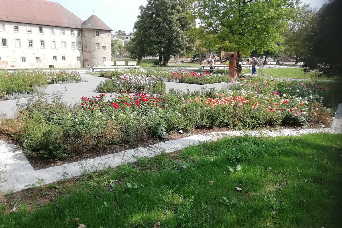 Der neue Rosengarten im Schlosspark erblühte bereits im letzten Jahr.