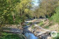 Am Remsgarten fließt und sprießt es.