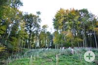 Im Stadtwald wird fleißig aufgeforstet.
