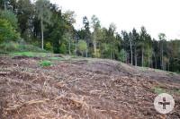 Immer mehr schadhafte Bäume müssen gefällt werden.
