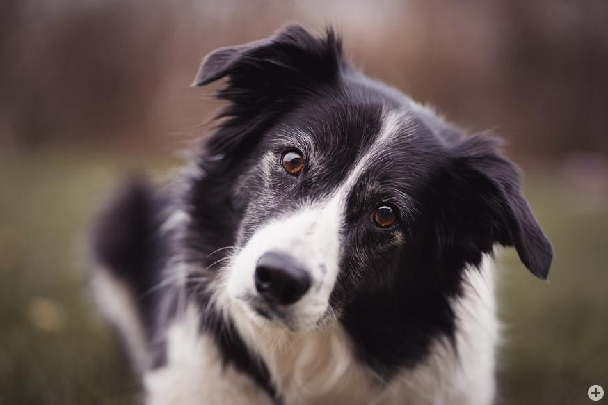 In den kommenden Tagen werden die Hundesteuerbescheide verschickt.