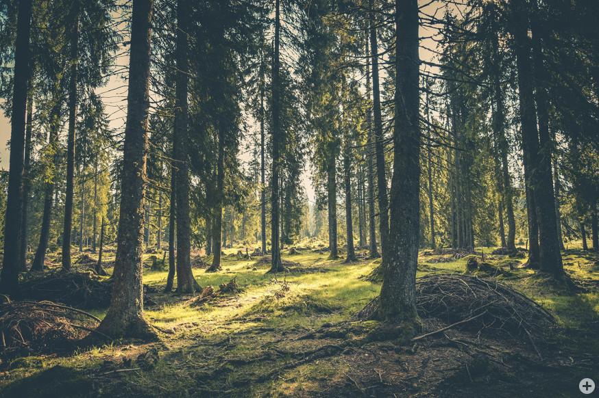 Der Schorndorfer Stadtwald ist derzeit gesperrt (Symbolfoto).