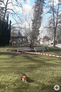 Im Stadtpark geriet ein großer Baum in Schieflage.
