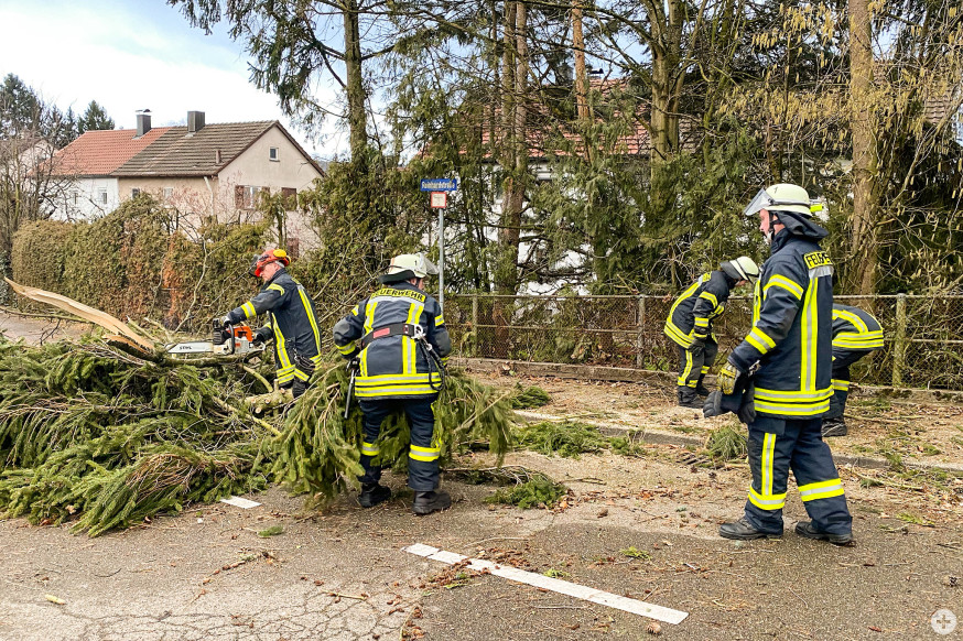 Im Menzelweg entfernte die Feuerwehr einen umgestürzten Baum.