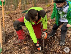 Rund 50 Kinder haben am Wochenende 150 Bäume für den Aichenbach gepflanzt.